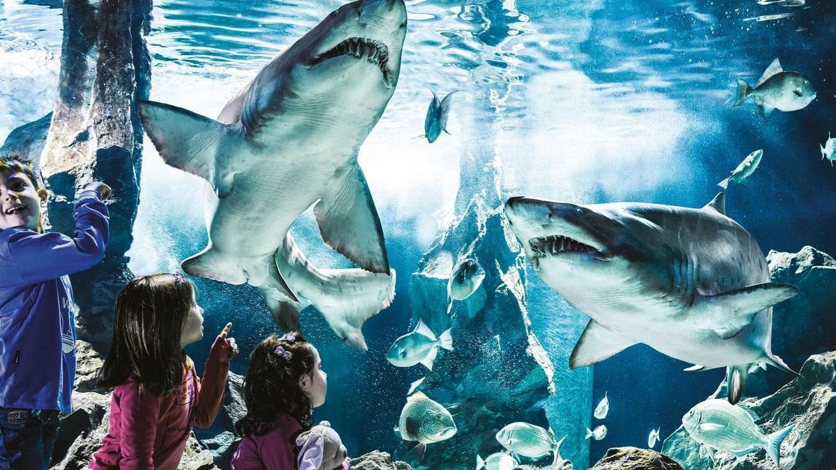 Alla scoperta dell 39 acquario di cattolica for Acquario tartarughe grandi