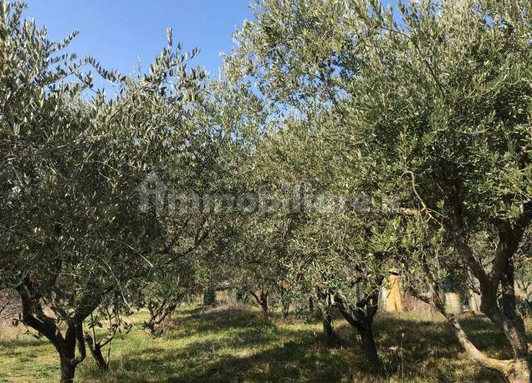 Terreno agricolo a Riccione