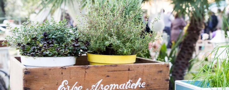 Erbe aromatiche - Giardini d'Autore