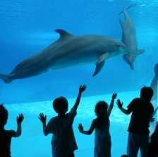 Notte delfini