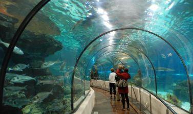 hotel biglietti parco acquario di cattolica