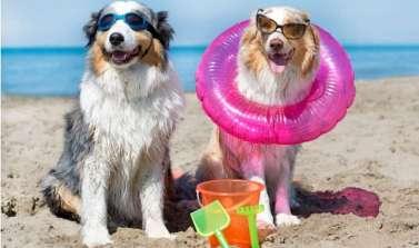 Vacanza al mare con il tuo amico a quattro zampe!